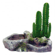 Island with cactus L