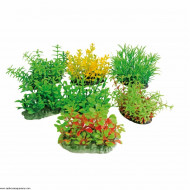 Plant Tropical 8cm